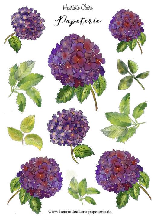 Aufkleber HORTENSIEN HYDRANGEA Aquarell violett
