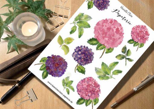 Aufkleber HORTENSIEN HYDRANGEA Aquarell rosé &violett