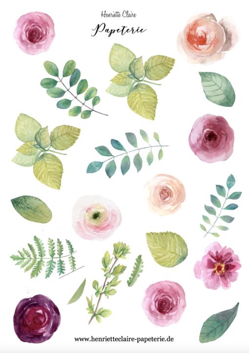 Aufkleber Ranunkeln und hellgrüne Blätter